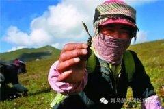 肾病专家为您介绍:有种神奇的草可益肾补肺